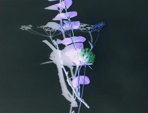 Surreale Pflanzenwelt im WPU Fotografie